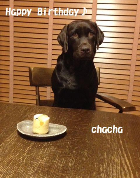 chacha_20111130104519.jpg