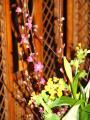 tnH22-03-06桃の花 (2)