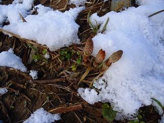 春の嵐、名残り雪 006