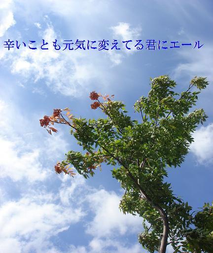 20060928081153.jpg