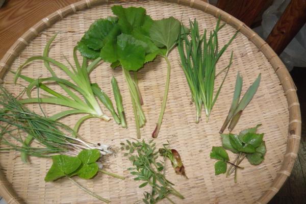 我が家で摘んだ山菜