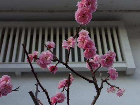 20110326春めく21271
