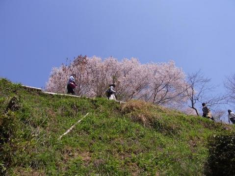 20110410 吉野山お花見ポタ1285