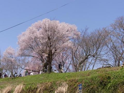 20110410 吉野山お花見ポタ1280