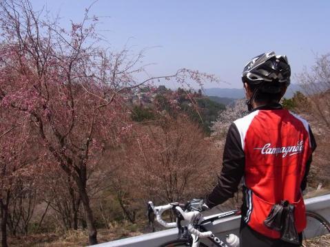 20110410 吉野山お花見ポタ1276