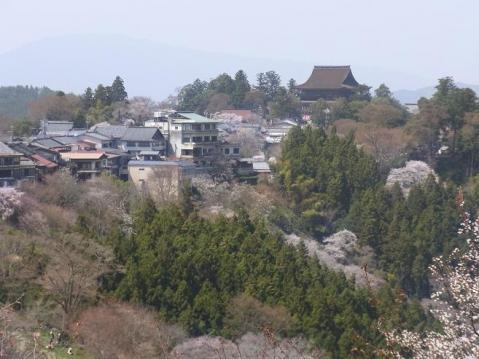 20110410 吉野山お花見ポタ1275