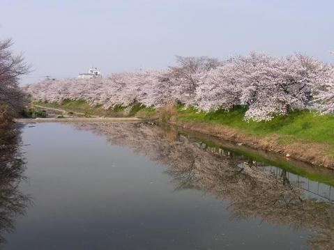 20110410 吉野山お花見ポタ1293