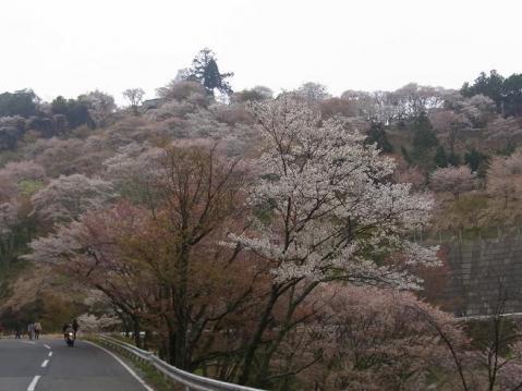 20110416桜吹雪の芋峠から吉野山1304