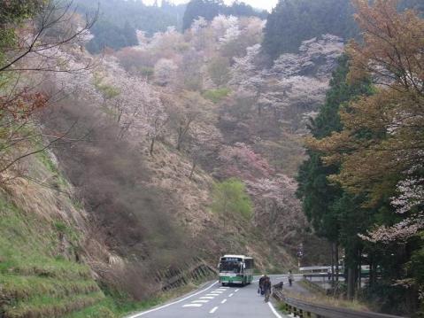 20110416桜吹雪の芋峠から吉野山1303