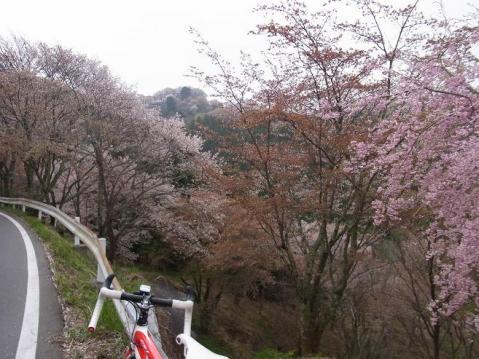 20110416桜吹雪の芋峠から吉野山1301