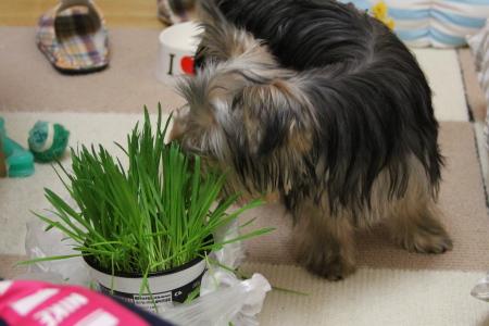 犬と猫が好きな草。