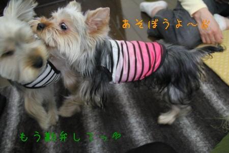 ココアちゃん&まりお