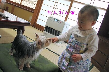 姪っ子とココちゃん1