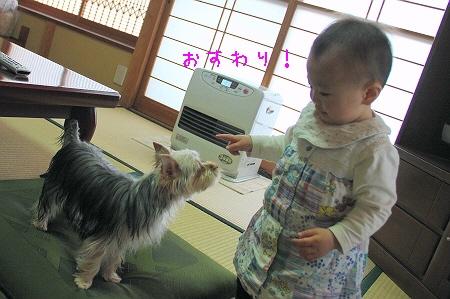 姪っ子とココちゃん2