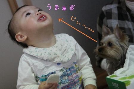 姪っ子とココちゃん5