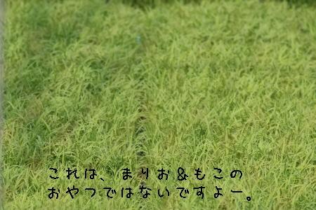 稲、稲、稲…