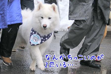 生ZIPPEI♪