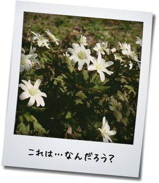 これは何の花?