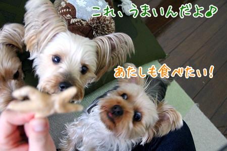 ココアちゃん「クッキー食べたい!」