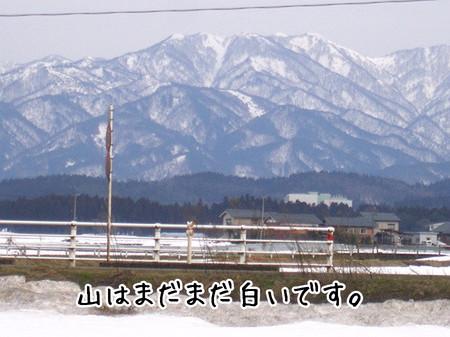 山はまだ雪化粧(かなり厚塗り)