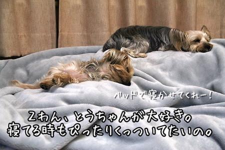 おやすみまりも