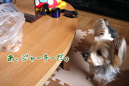 まりお、テーブル上にジャーキー発見。