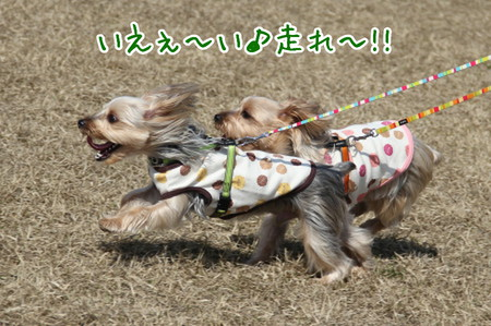 まりお「いぇ~い♪走れ~!!」