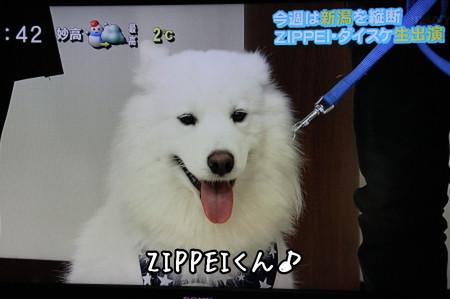 生出演中のZIPPEI