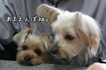 まりお&ココアちゃん。あまえんぼ組。