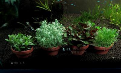 素焼き鉢水草