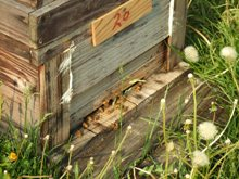養蜂001