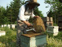 養蜂002