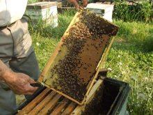 養蜂003