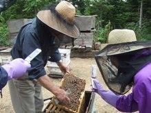 0714養蜂体験001