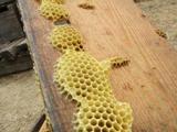 0714養蜂体験002