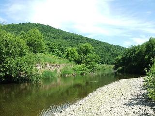 川の生きもの