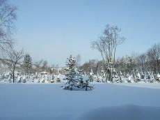 080105雪景色002