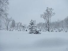080106雪景色002