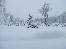 080107雪景色002