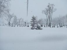 080109雪景色002