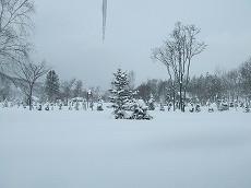 080110雪景色002
