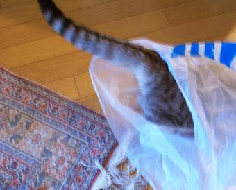 大好きなビニール袋3