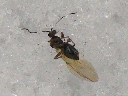 ハチのような虫