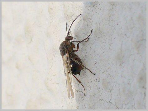 ハチの仲間1