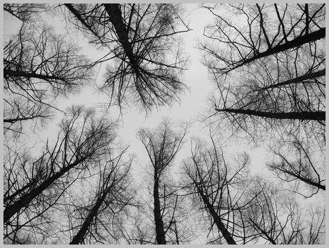 カラマツの林2