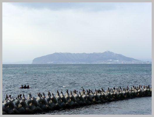 函館山と「うみう」の群れ2
