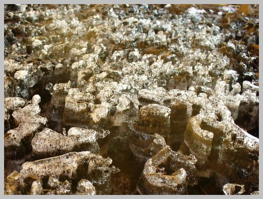 湿地に広がる氷の峡谷1