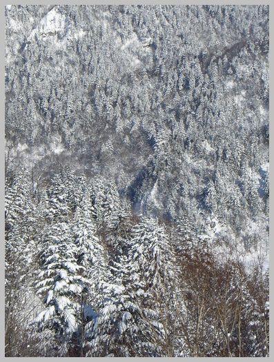 一面の雪の林
