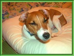 縮小 この後、家の大ババサンの腕枕で、朝まで・・・