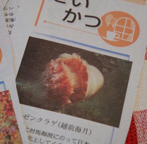 newspaper15-5.jpg